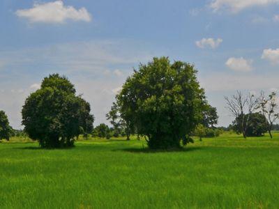 Bowman Acres